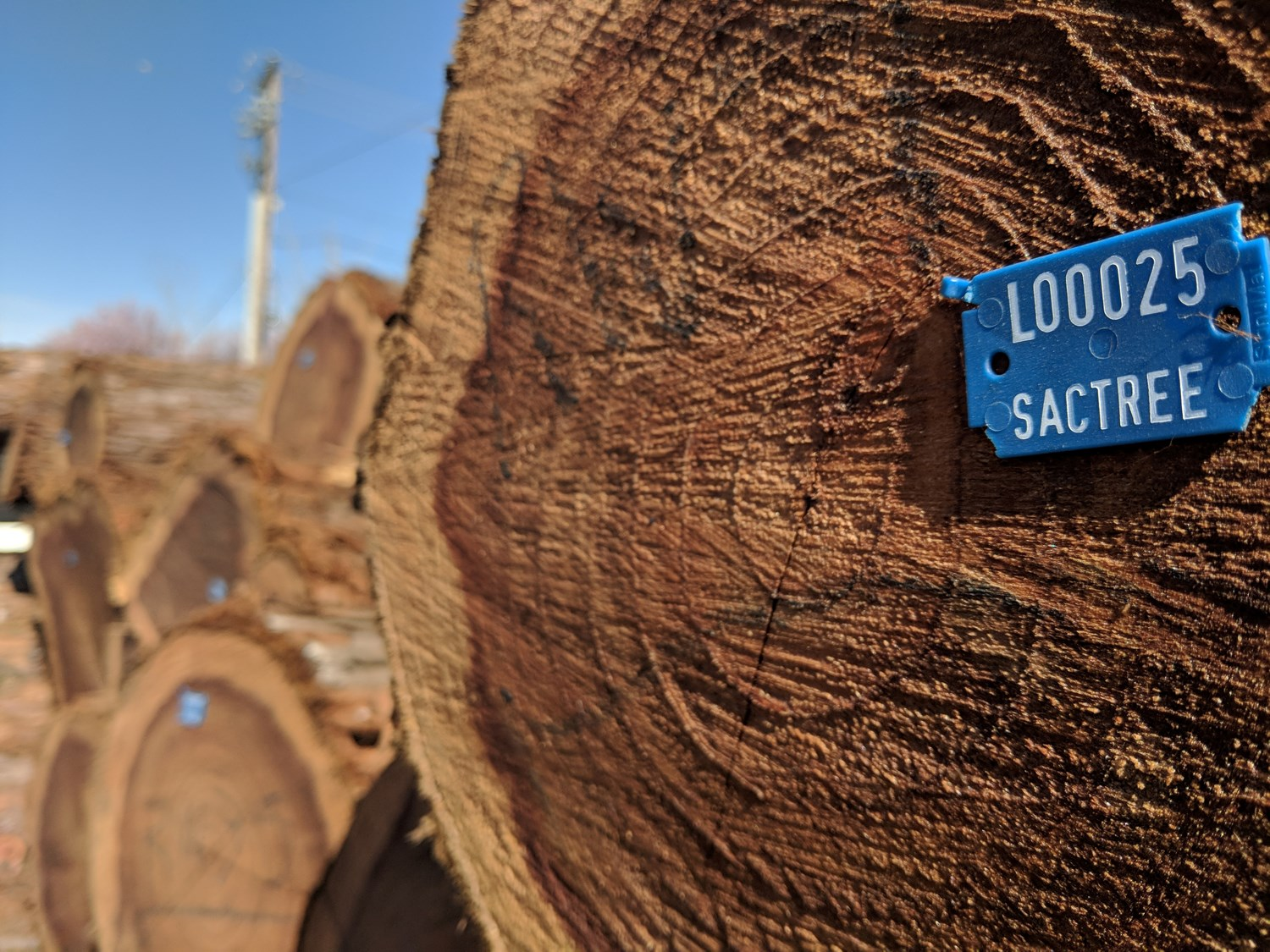 Local wood now available at Hacker Lab, by Sacramento Tree Foundation